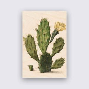 Hout - Cactus