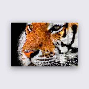 Plexiglas - Koning van de jungle