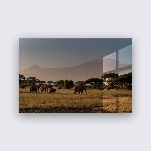 Plexiglas - Savanne life