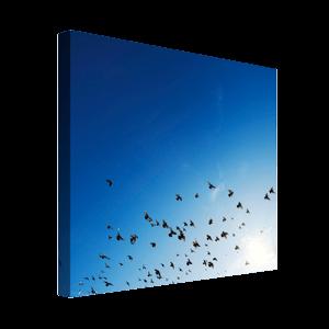Foto op canvas - 2 cm frame